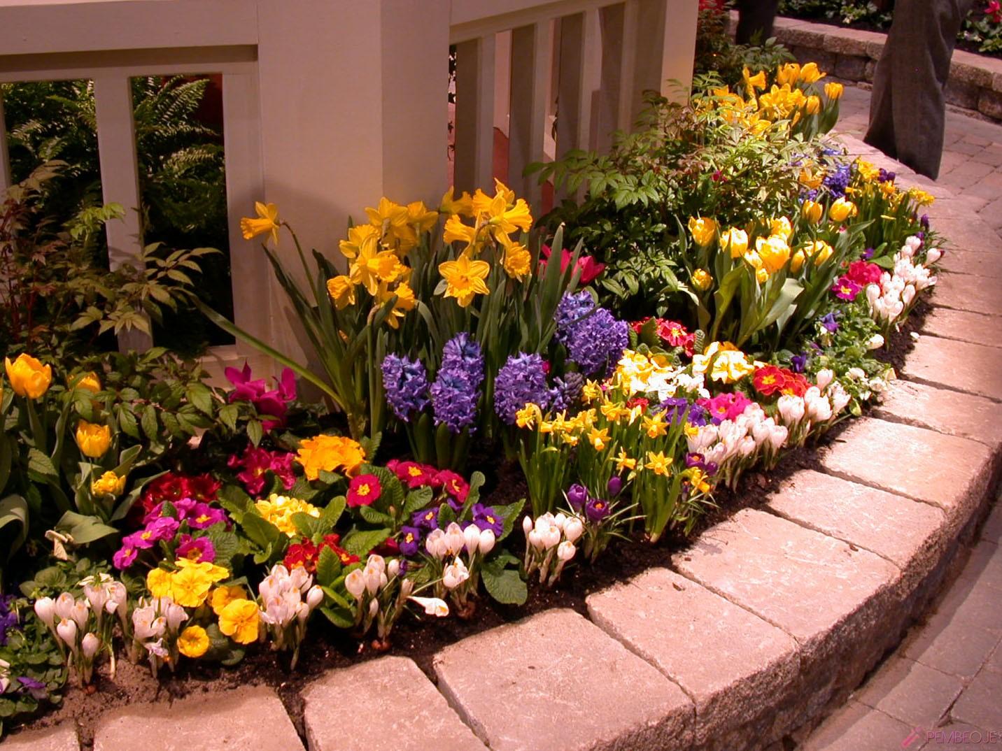 Какие цветы сажать с нарциссами 80