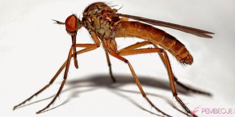 Piyasadaki sivrisinekler için en etkili çözüm